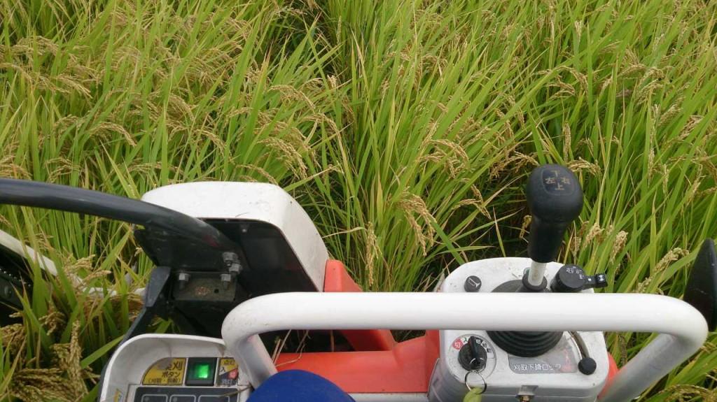 2014年の稲刈り完了