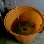 籾の漬浸(ししん)