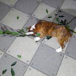 ローリエ大好きボクサー犬