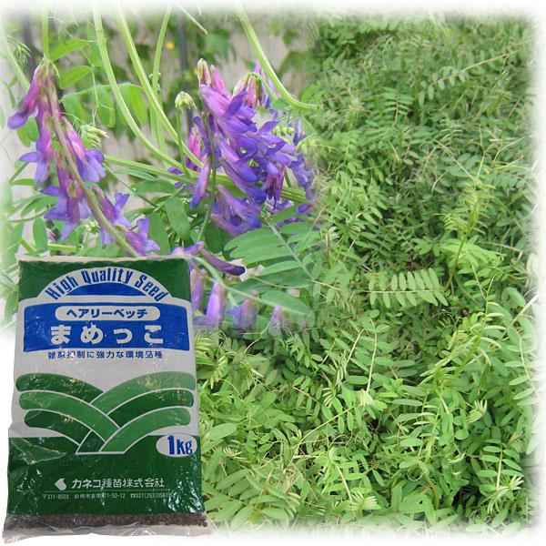 2013年の緑肥はヘアリーベッチで