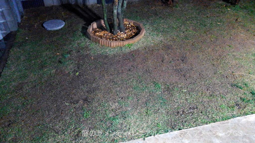 庭の芝メンテ | ペレニアルライグラス アメージングGS