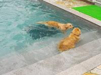サスケ、こんどはプールいこうな!水初体験やけど、怖がらずに入れるかな?