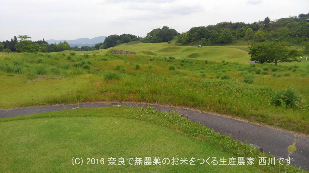 幼なじみとピート・ダイに挑戦 | 三重県伊賀市のセントレイクスゴルフ倶楽部
