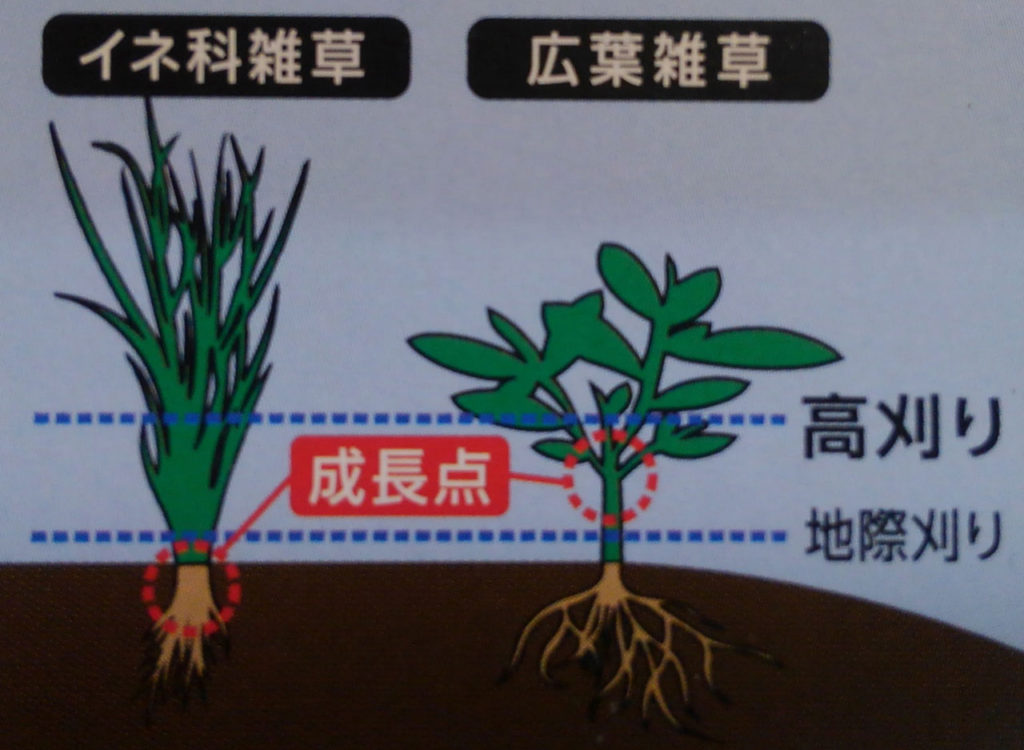 草刈りは高刈りで省力化 | Zizlizer ジズライザーHIGH50ハイ50