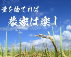 量を捨てれば、稲作は簡単