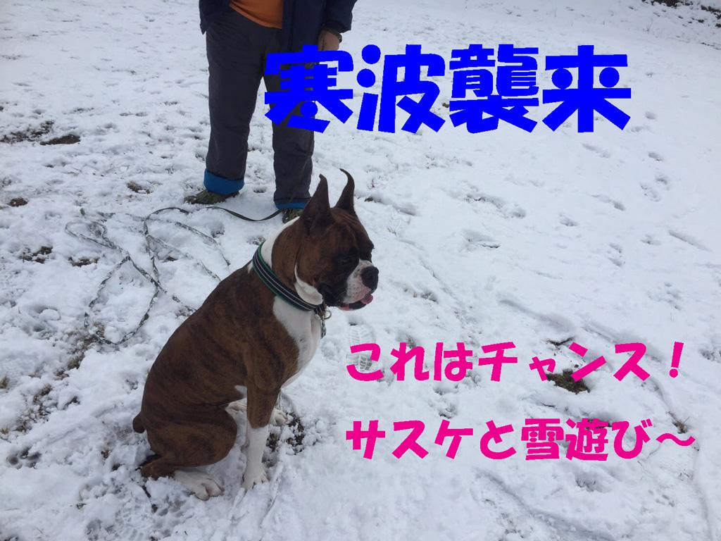 寒波だサスケと雪遊び | かまくら初体験
