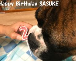 二歳の誕生日 | Happy Birthday SASUKE
