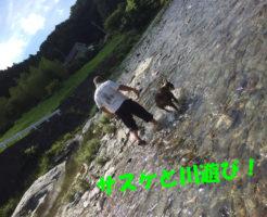 ボクサー犬と川遊び