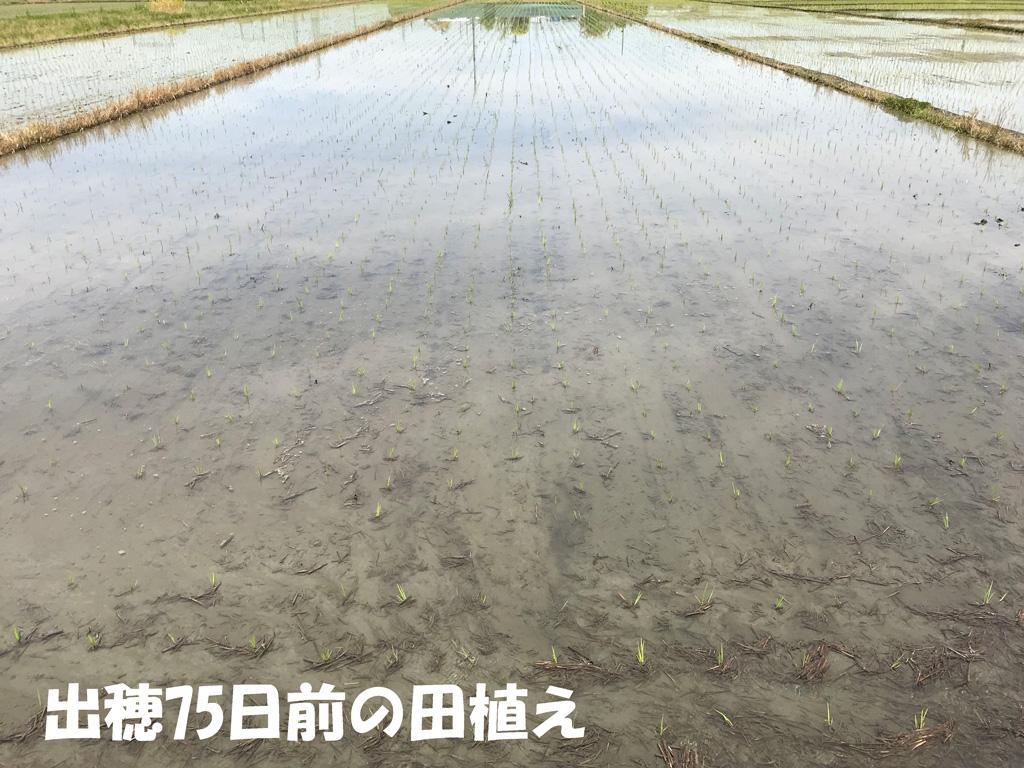 平成30年の田植え