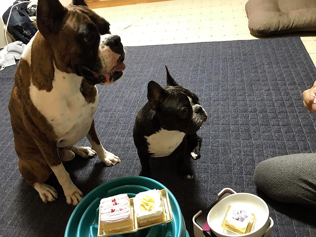 サスケ君三歳の誕生日