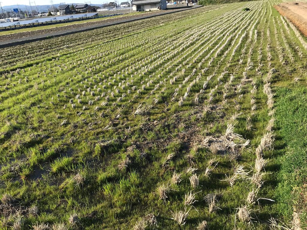 2019年の稲作スタート | 今年は田んぼの整備から