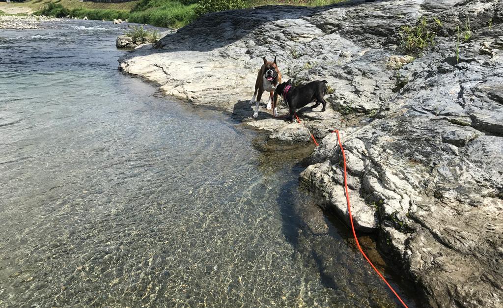 涼を求めて川遊び | サスケとコテツと吉野川(高見川)