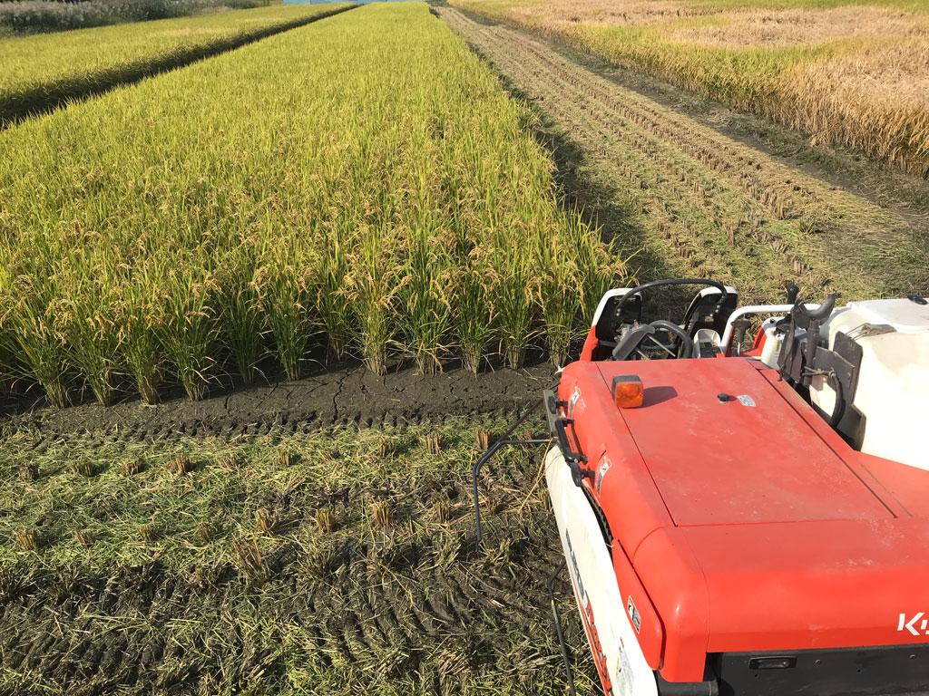 令和二年の稲作-田植えから収穫まで