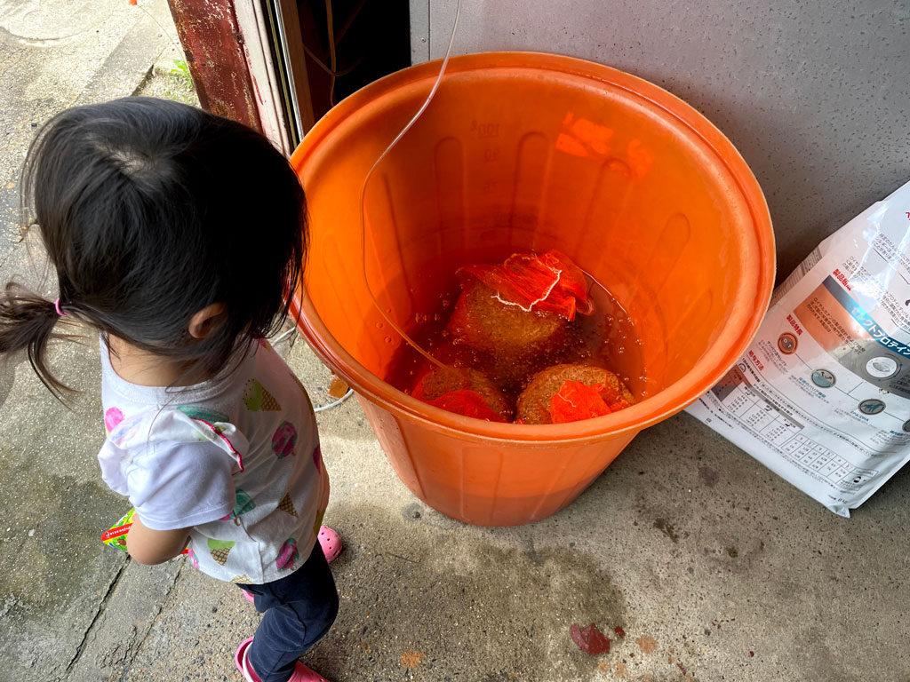 令和三年の苗づくり | 水道水だけのプール式育苗