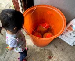 種籾の浸水