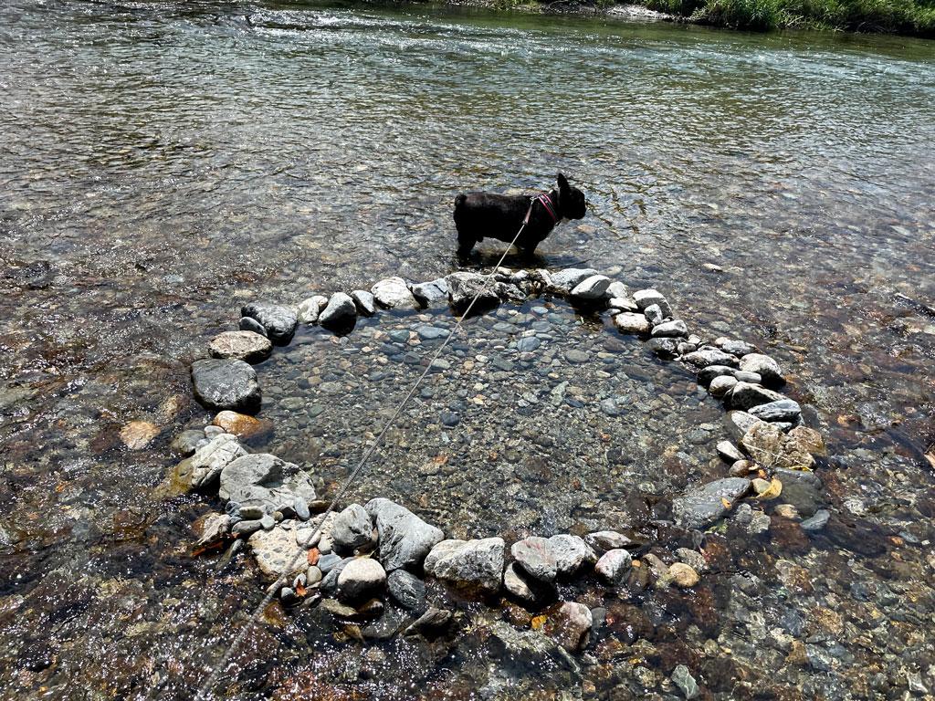 高見川で水遊び | ワンコと吉野町へ