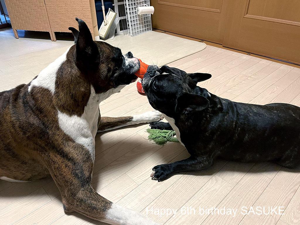 サスケ君 六歳の誕生日