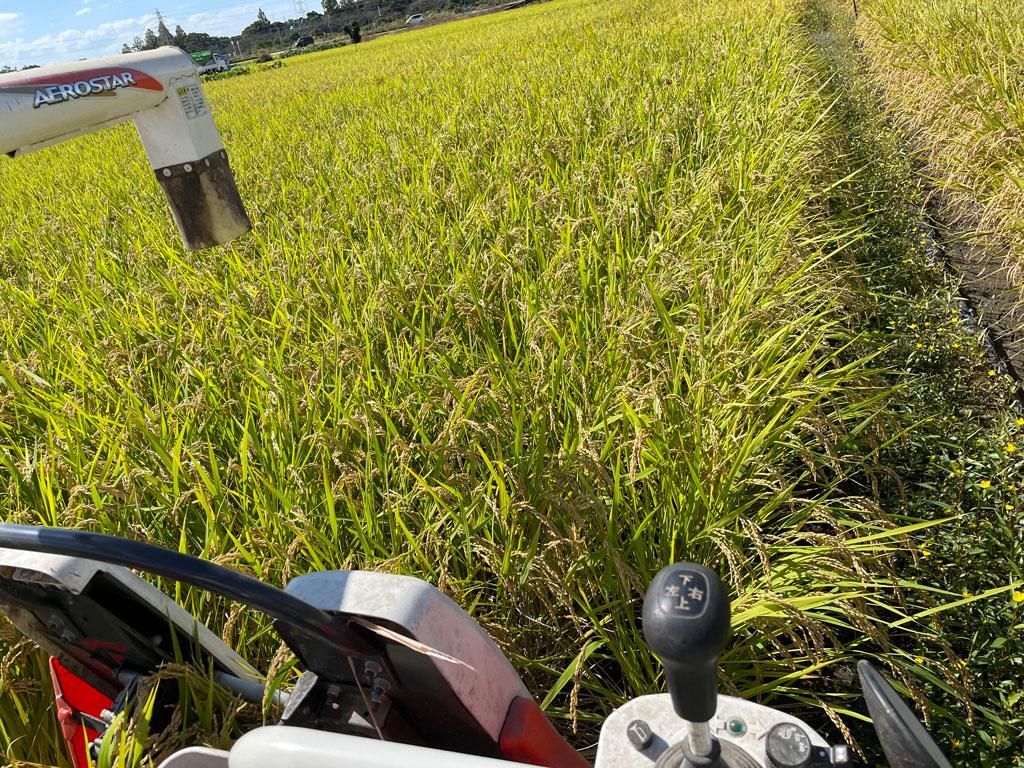 令和三年の稲刈り | 美味しいお米は早めに収穫